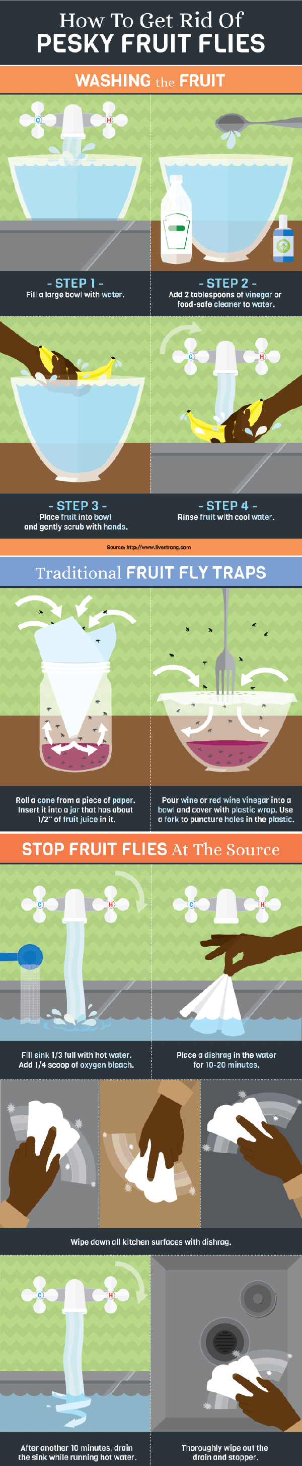 Dealing With Fruit Flies The Basics Best Way To Get Rid Of Flies
