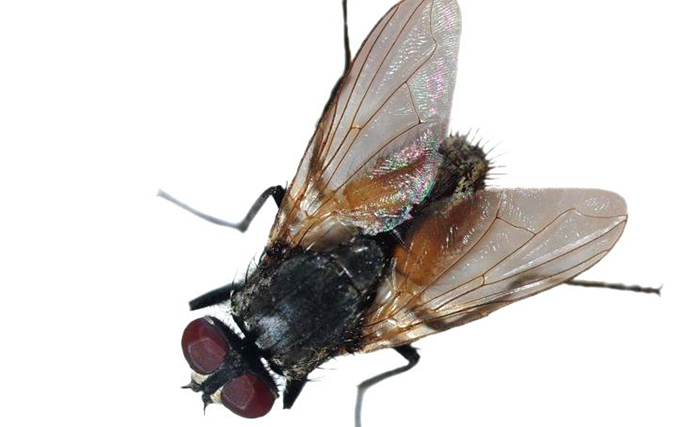 need to get rid of flies here are 10 best fly killers in 2018 best way to get rid of flies. Black Bedroom Furniture Sets. Home Design Ideas